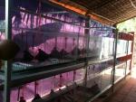 Giới thiệu về Lươn giống nhân tạo Trang Trại Thanh Tân